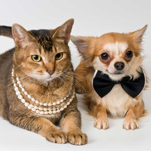 Fancy cat and dog